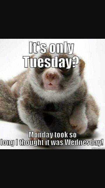 18 Taco Tuesday Meme 14