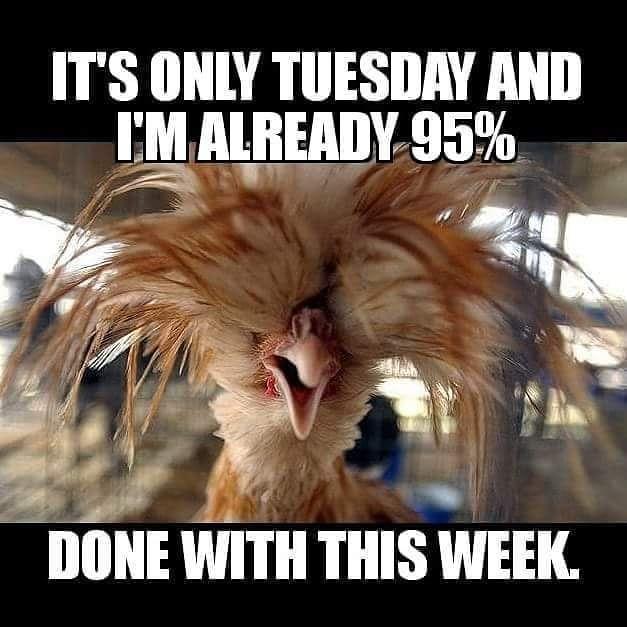 20 Happy Tuesday Meme 12