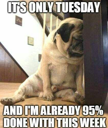 20 Happy Tuesday Meme 19