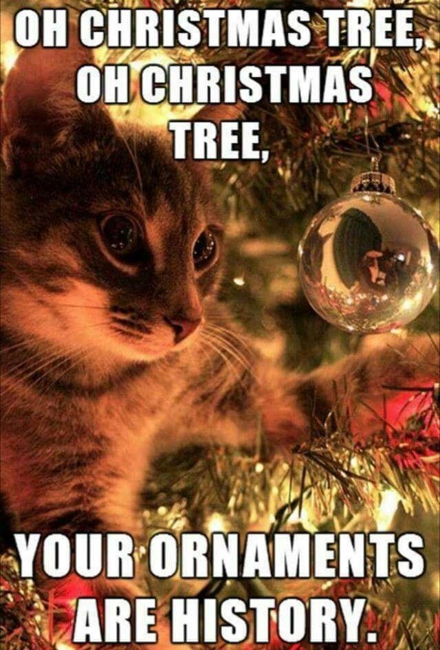 19 Christmas Memes Dank 3