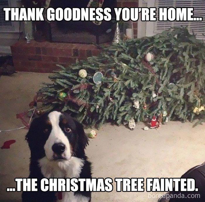 19 Christmas Memes Family 10
