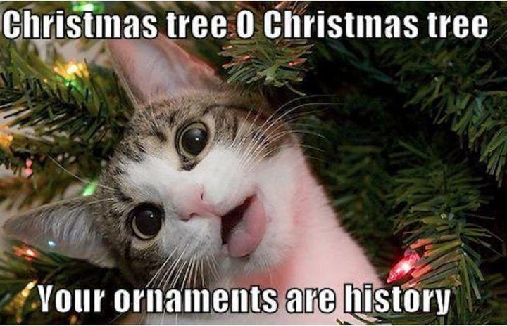 19 Christmas Memes Family 17
