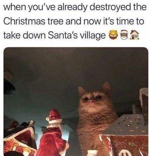 19 Christmas Memes Grinch 4