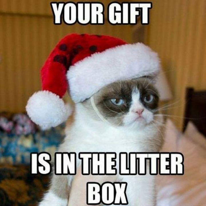 19 Christmas Memes Hilarious 11
