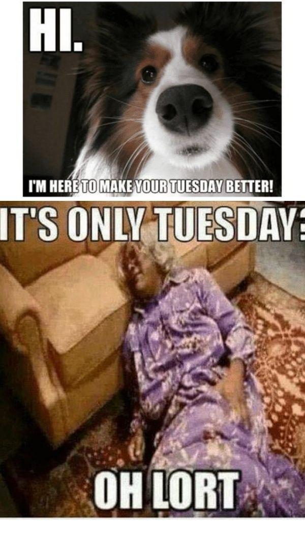 19 Transformation Tuesday Meme 4