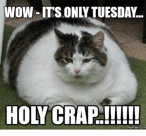 19 Tuesday Meme Animal Pictures 1