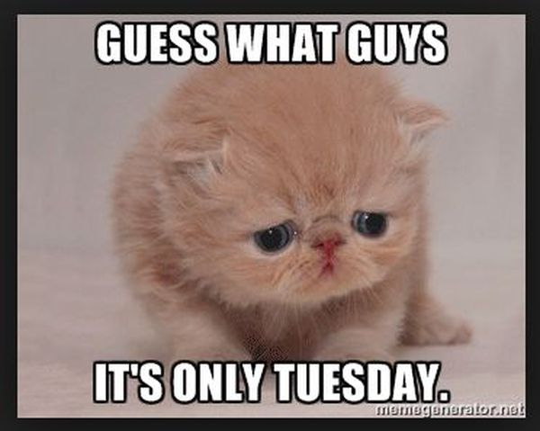19 Tuesday Meme Animal Pictures 12