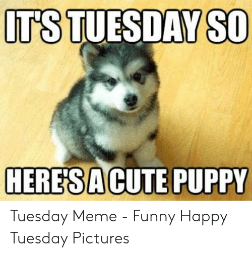 19 Tuesday Meme Animal Pictures 3