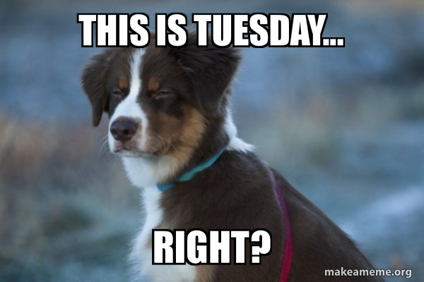 19 Tuesday Meme Animal Pictures 4