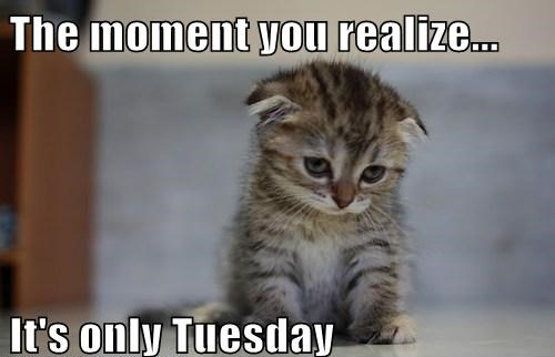 19 Tuesday Meme Animal Pictures 6