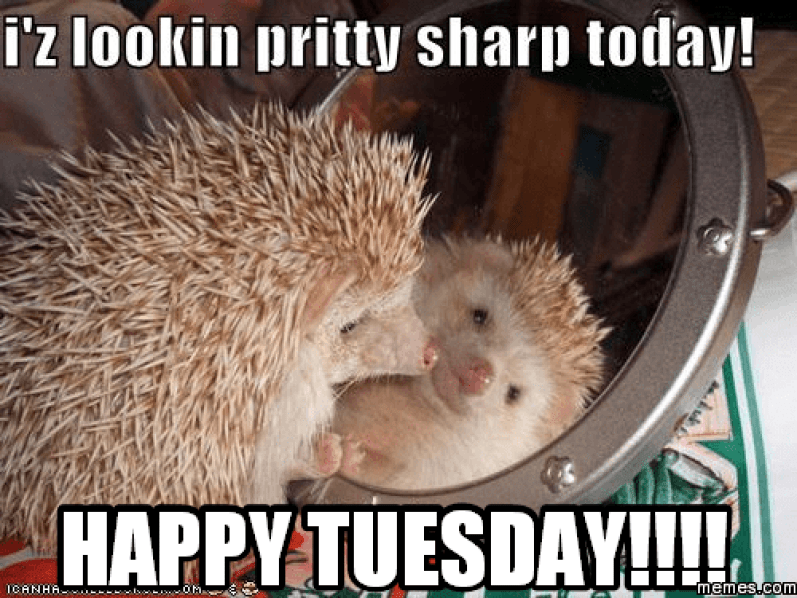 19 Tuesday Meme Animal Pictures 7