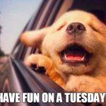 19 Tuesday Meme Hilarious 15