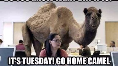 19 Tuesday Meme Hilarious 18