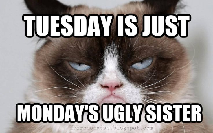 19 Tuesday Meme Hilarious 6