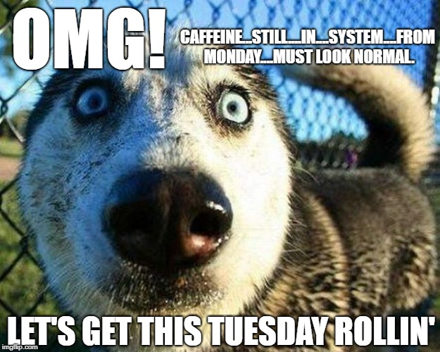 20 Tuesday Meme Awesome 17