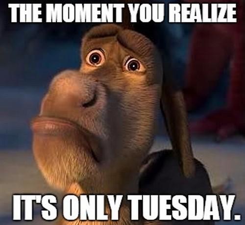 20 Tuesday Meme Mornings 1