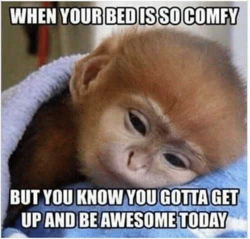 20 Tuesday Meme Mornings 5