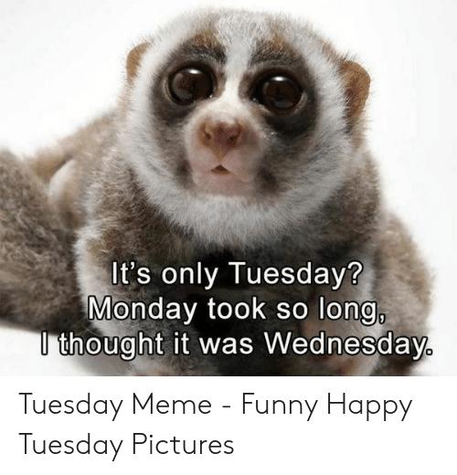 20 Tuesday Meme Mornings 6