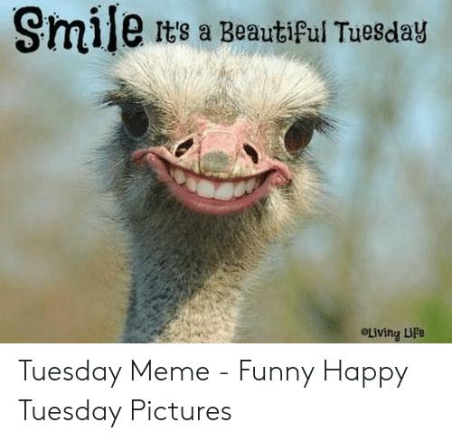 20 Tuesday Meme Mornings 7